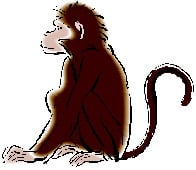 Monkey 2014 Chinese Animal Predictions