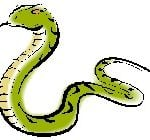 2014 Chinese Animal Prediction for the Snake