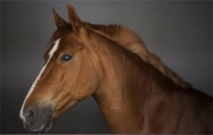 Feng Shui horse predictions for 2020